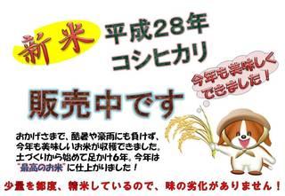 米販売02.jpg