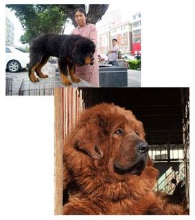 tibetan00.jpg