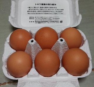 tokiwatamago02.jpg